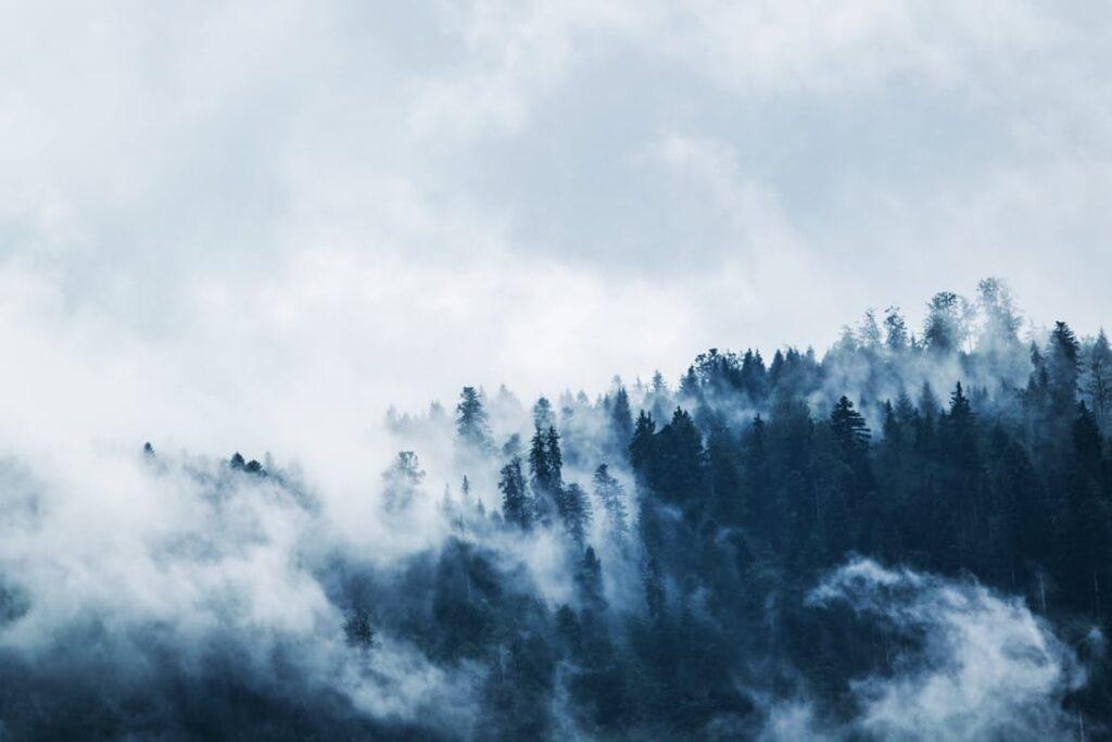 Berig livet med en dejlig tur i skoven