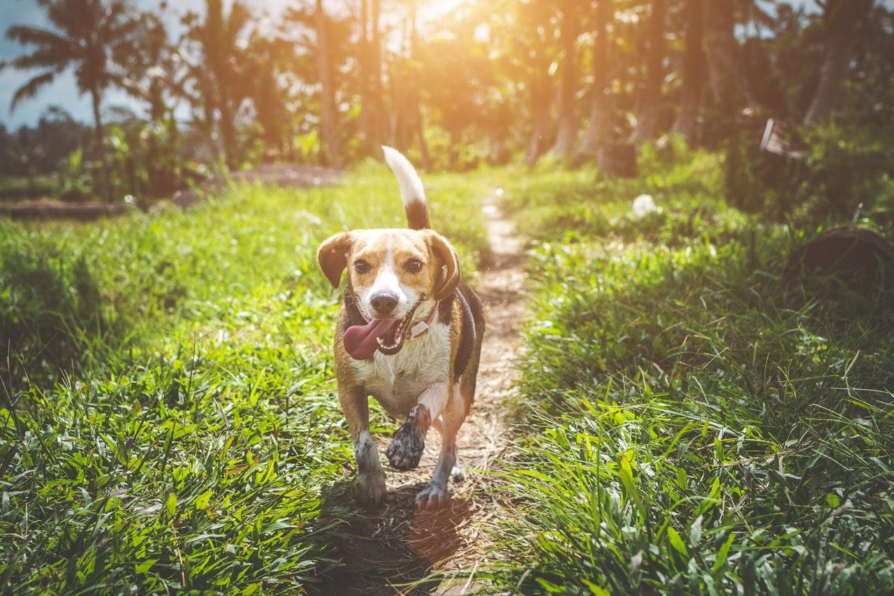Udendørs aktivitet med hund
